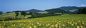 Ferien im Dreiländereck Bayerischer Wald, Böhmerwald, Oberösterreich